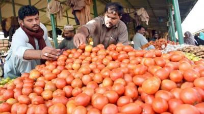 سندھ:ایک ماہ میں ٹماٹر4سو سے 5 روپے فی کلو پر آ گیا