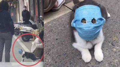 چین:کرونا وائرس کا خوف، مالک نے بلی کا حلیہ بگاڑ دیا