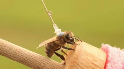 بغیر ڈرائیور کار اور ڈرون سازی کیلئے مکھیوں پر انٹینا نصب
