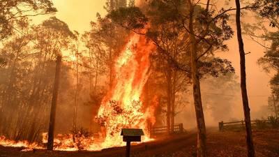 آسٹریلیا کے جنگلوں میں لگنے والی آگ کی تحقیقات کا آغاز