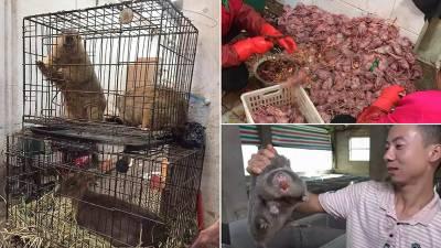 چین میں جنگلی جانوروں کو پکانے پر پابندی