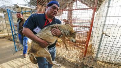 جنگ زدہ علاقوں سے جانوروں کو محفوظ کرنے والا عرب ڈاکٹر