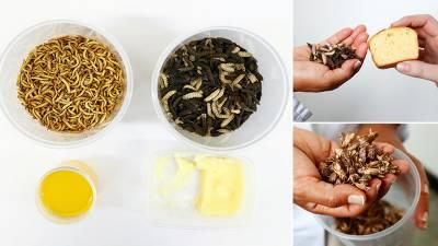 سائنسدانوں کا مکھیوں اور کیڑے مکوڑوں سے مکھن تیار کرنے کا تجربہ