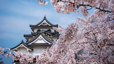 جاپان میں چیری کے پھول کھلنے کے موسم کا آغاز