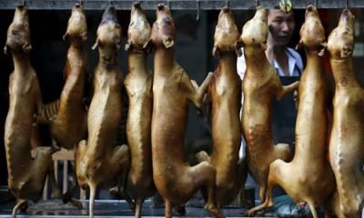 کورونا: چینی شہر میں کتے بلی کا گوشت کھانے پر پابندی عائد