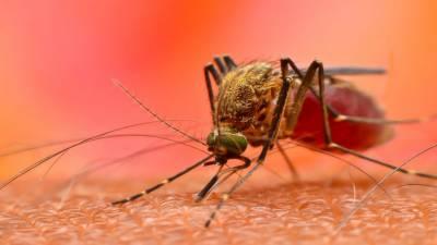 افریقہ میں ملیریا سے دگنی اموات کا خدشہ ہے:عالمی ادارہ صحت