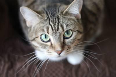 فرانس : پہلی پالتو بلی کروناوائرس کا شکار,جانور پالنے والے افراد کو خوف زدہ کردیا
