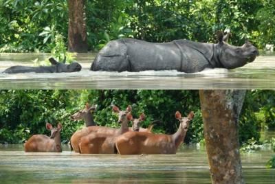 بھارت میں تباہی، 66 جانور ہلاک