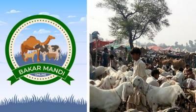 پنجاب میں قربانی کے جانوروں کی آن لائن خریداری کیلئے ایپ کا آغاز