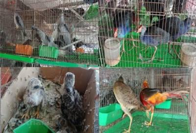 ویت نام میں جنگلی جانوروں کی تجارت پر پابندی