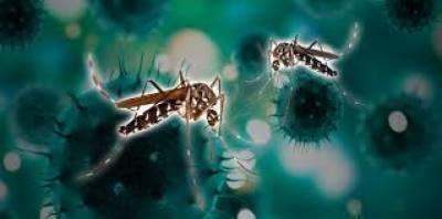 کیا کرونا وائرس مچھروں سے منتقل ہوسکتا ہے؟