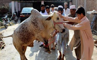 عید الاضحیٰ کے دوسرے روز قربانی کا سلسلہ جاری