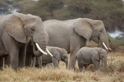 کینیا میں ہاتھیوں کی تعداد دوگنی ہو گئی
