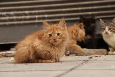 تحفظ حیوانات کی تنظیمیں گھرسے نکالی 110 بلیوں کو پناہ دینے کے لیے سرگرم