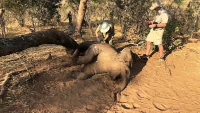 پراسرار وائرس پھیلنے لگا، ہاتھیوں کے بعد دیگر جانوروں کی بھی اموات