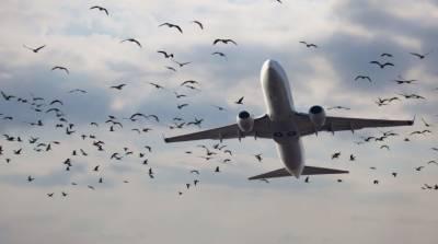کراچی ایئرپورٹ، 1 دن میں 5 پروازوں سے پرندے ٹکرا گئے