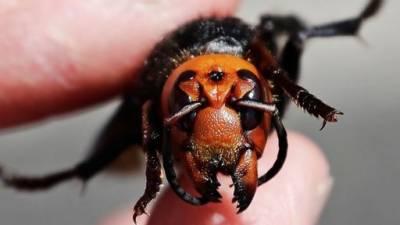 امریکا میں خوف کی علامت قاتل مکھی کا سراغ مل گیا