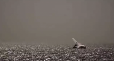 پاک بحریہ کا سطح سمندر اور فضاء سے جہاز شکن میزائلز فائرنگ کا کامیاب مظاہرہ