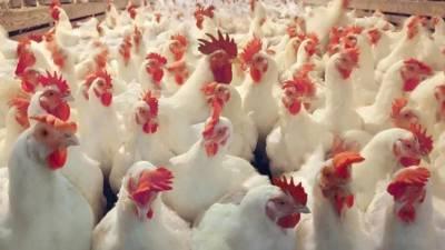 شہر میں پرچون سطح پر برائلر گوشت, زندہ برائلر مرغی اور فارمی انڈوں کی قیمت