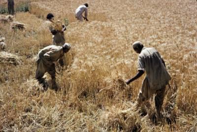 خیبر پختونخواہ سے کاشتکاروں اور صنعتی مزدور تنظیموں کے عہدیداروں کی کمشنر مردان منتظر خان سے ملاقات