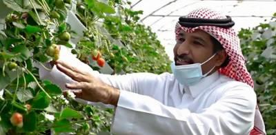 اسٹرابیری کی کاشت کا منفرد طریقہ، سعودی شہری نے دنیا کو حیران کردیا