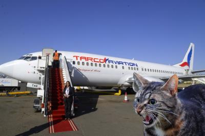 سوڈان: دوران پرواز 'بلی' کا پائلٹ پر حملہ