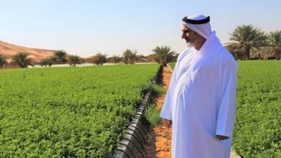 دبئی : خوراک کی پیداوار میں اضافہ کیلیے اہم اقدامات