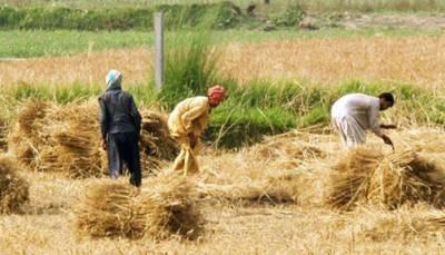زراعت کیلئے 12ارب روپے مختص کئے ہیں ، شوکت ترین