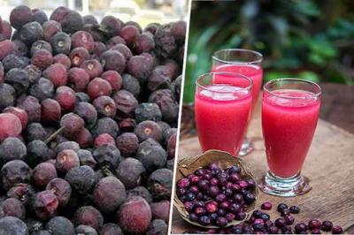 گرمی کے موسم میں فالسہ کھانے یا اس کا جوس پینے کے حیرت انگیز فوائد