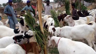 عید الاضحی کی آمد، جانوروں کی قیمتیں بڑھ گئیں