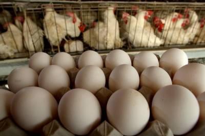 مقامی مارکیٹ میں زندہ برائلر گوشت و انڈوں کی قیمتیں