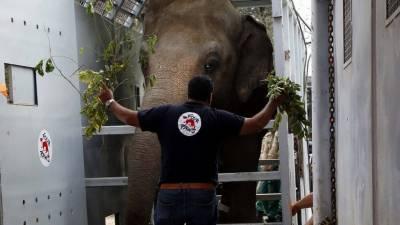 پاکستان سے کمبوڈیا پہنچنے والا ہاتھی آزاد، کاون کو جنگل میں چھوڑ دیا گیا