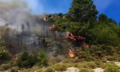 ترکی کے تفریحی شہر انطالیہ کے جنگلات میں آگ بھڑک اٹھی