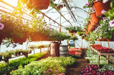 باغبانوں کو نرسری سے پودے خریدتے وقت جھاڑی دار پودوں کا چناﺅ کرنے کی ہدایت