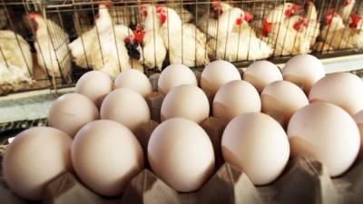 لاہور کی مقامی مارکیٹ میں زندہ برائلر گوشت و انڈوں کی قیمتیں
