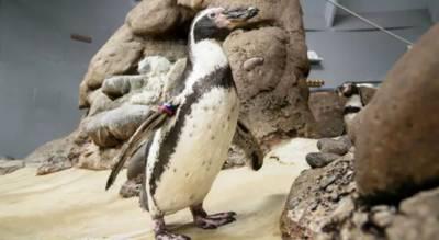 دنیا کا سب سے بوڑھا پینگوئن چل بسا