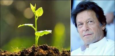 ہماری حکومت درختوں کے تحفظ کے لیے پرعزم ہے ، وزیراعظم