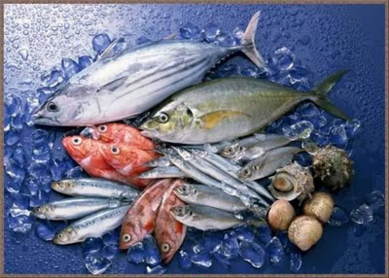 سمندری خوراک کی برآمدات میں 2.48 فیصد اضافہ ریکارڈ