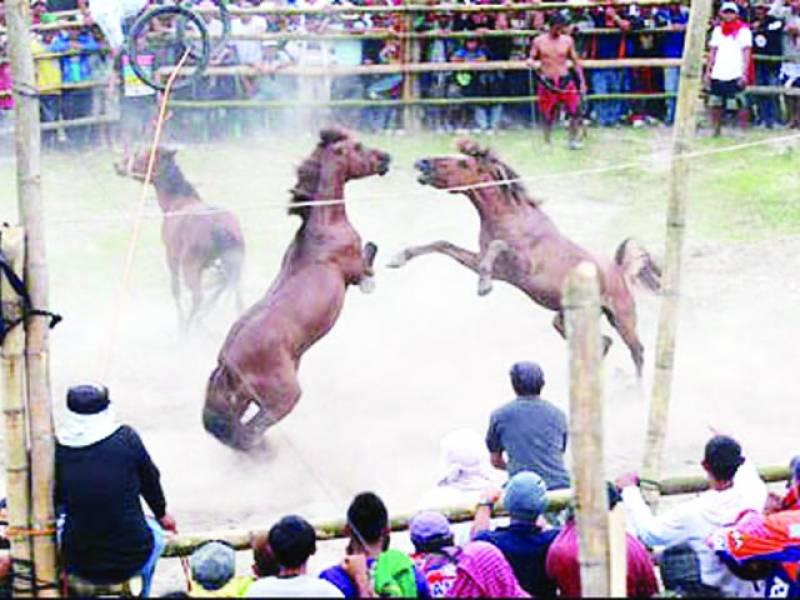 قدیم روایت گھوڑوں کی لڑائی کا مقابلہ