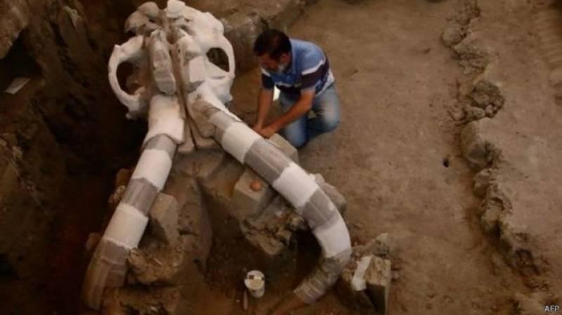 میکسیکو: معدوم نسل کے ہاتھی کی باقیات دریافت