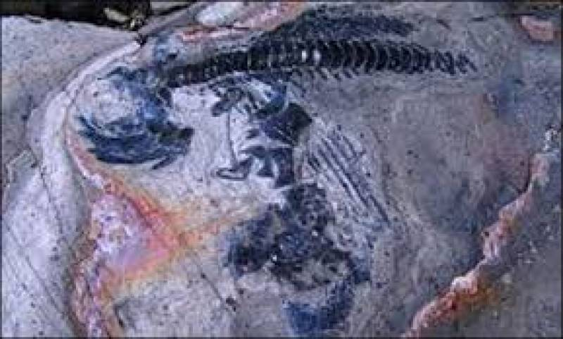 ارجنٹینا میں 9 کروڑ سال پرانے ڈائنو سار کا ڈھانچہ دریافت