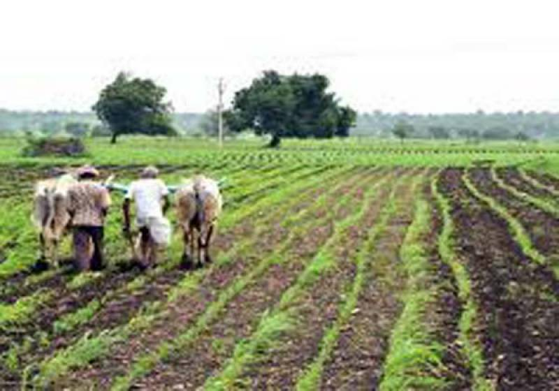 حکومت نے زرعی آمدن پر انکم ٹیکس کی وصولی روک دی: ڈاکٹر فرخ