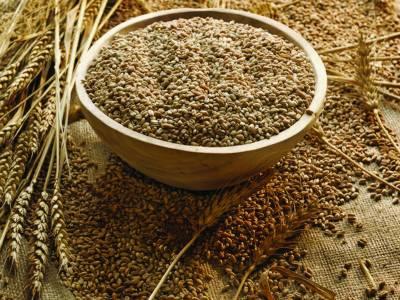 گندم کی پیداوار میں اضافے کے لئے امریکی اور پاکستانی سائنسدانوں کا اشتراک