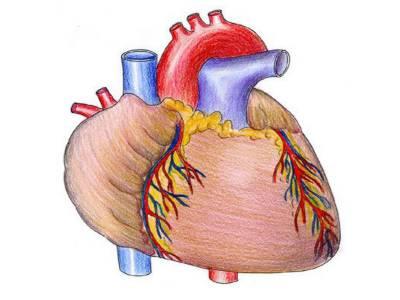 انار دل کو تقویت دیتا، سرطان سے محفوظ رکھتا ہے: طبی ماہرین