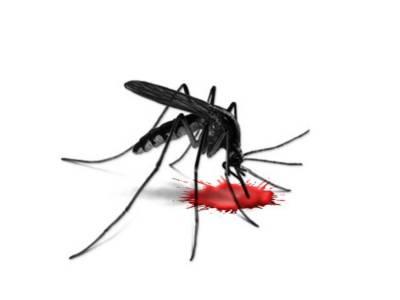 کراچی مزید 13افراد میں ڈینگی وائرس کی تصدیق