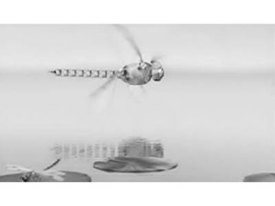 جرمن سائنسدانوں نے روبوٹک ڈریگن فلائی تیار کر لی