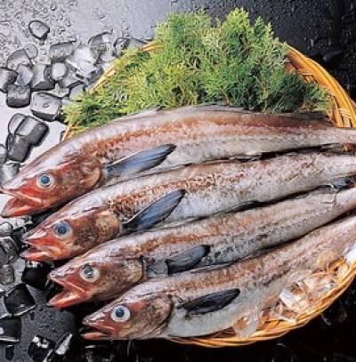 مچھلی اور مصنوعات کی برآمدات میں 4.46 فیصد اضافہ