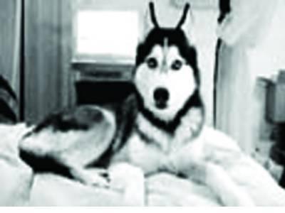 انسانی بولی کی نقالی کرنے والا کتا