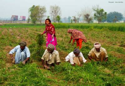 کسانوں کو لیزر ہولرز کی فراہمی: درخواستیں جمع کرانے کی تاریخ میں توسیع