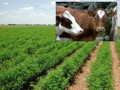 زراعت، لائیو سٹاک کے 4منصوبوں کیلئے 110ملین کی منظوری